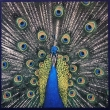 The Bluetones ‎– Expecting To Fly (CD)